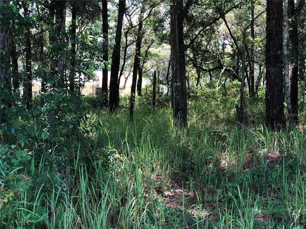 Cedar Trace - Photo 1
