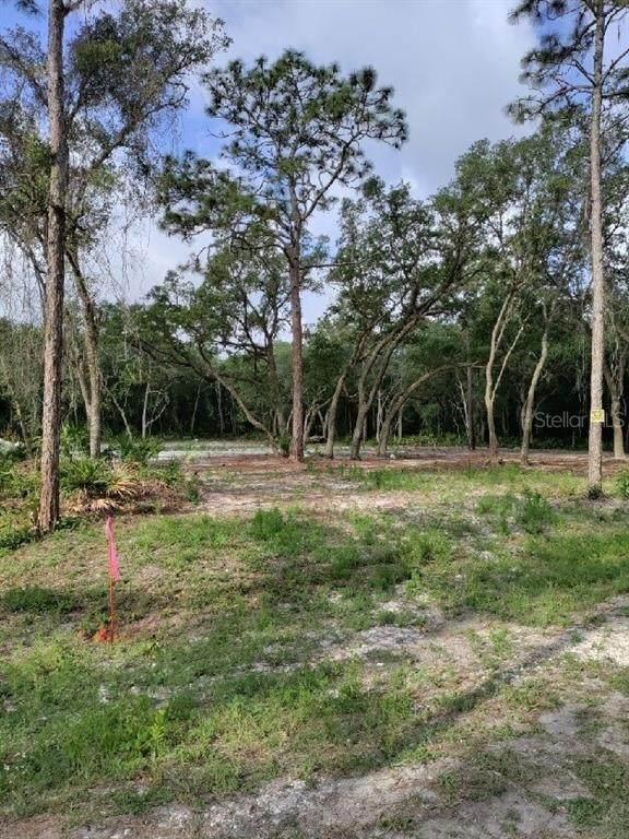 Nutmeg Drive, Webster, FL 33597 (MLS #T3305510) :: The Heidi Schrock Team
