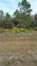 3462 NE 10TH Avenue, Cape Coral, FL 33909 (MLS #T3327399) :: Globalwide Realty