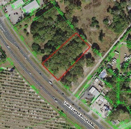 6712 Land O Lakes Boulevard, Land O Lakes, FL 34638 (MLS #U8125208) :: Armel Real Estate