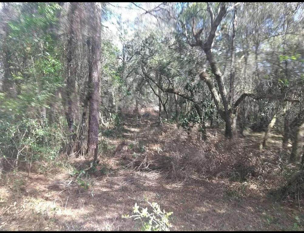 11405 Trails End Road - Photo 1