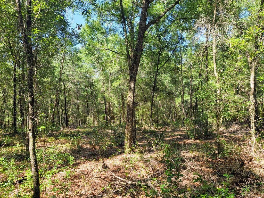 1625 Hidden Woods Way - Photo 1