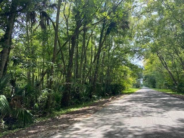 Possum Road - Photo 1