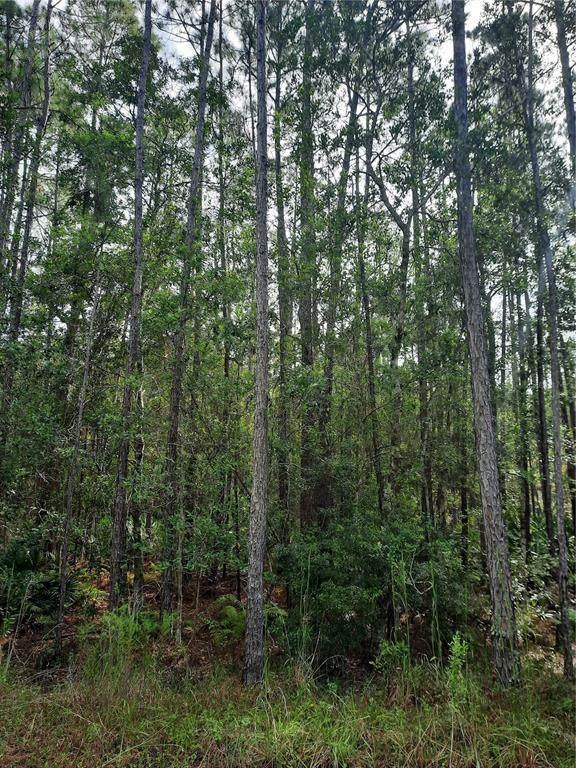 East Parkway, Deland, FL 32724 (MLS #V4921431) :: Everlane Realty
