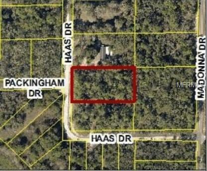 34135 Haas Drive, Webster, FL 33597 (MLS #W7800630) :: Team Pepka