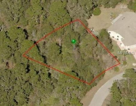 18 Douglas Court S, Homosassa, FL 34446 (MLS #W7800717) :: Griffin Group