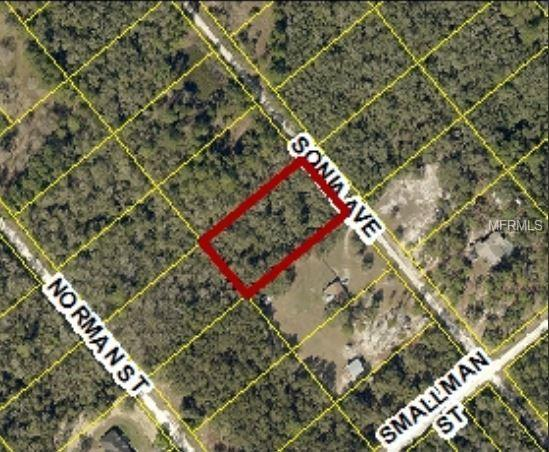 7241 Sonia Avenue, Webster, FL 33597 (MLS #W7806395) :: Mark and Joni Coulter | Better Homes and Gardens