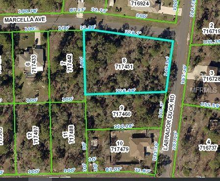 11422 Marcella Avenue, Weeki Wachee, FL 34614 (MLS #W7809663) :: NewHomePrograms.com LLC