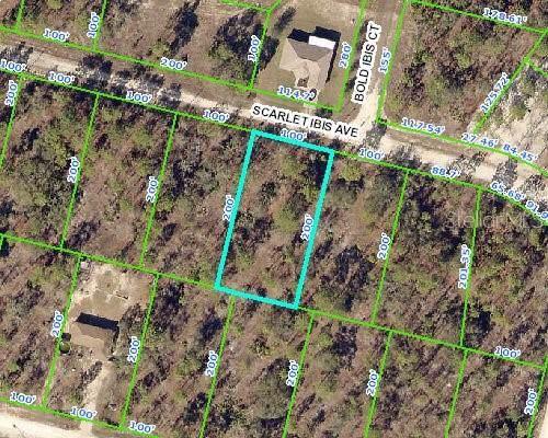 12250 Scarlet Ibis Avenue, Weeki Wachee, FL 34614 (MLS #W7815563) :: Cartwright Realty