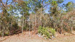 lot 5 Fool Duck Avenue, Weeki Wachee, FL 34613 (MLS #W7817954) :: Florida Real Estate Sellers at Keller Williams Realty