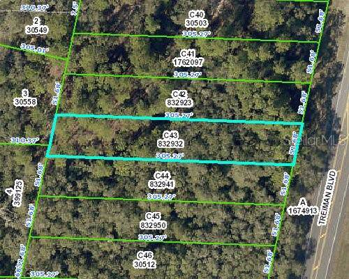 Treiman Boulevard, Webster, FL 33597 (MLS #W7818144) :: Cartwright Realty