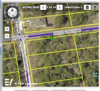 13236 Ruffed Grouse Road, Weeki Wachee, FL 34614 (MLS #W7824278) :: Griffin Group