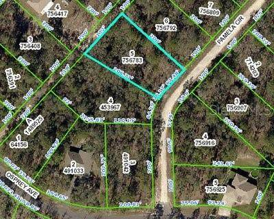 11465 Pamela Circle, Weeki Wachee, FL 34614 (MLS #W7824681) :: Premium Properties Real Estate Services