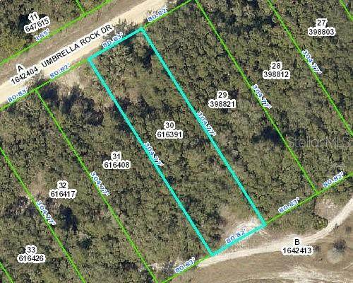 000 Umbrella Rock Drive, Webster, FL 33597 (MLS #W7827427) :: Griffin Group