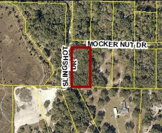Mocker Nut Drive, Webster, FL 33597 (MLS #W7829797) :: Everlane Realty
