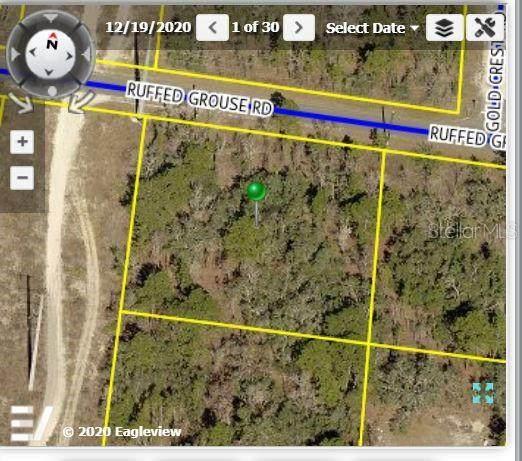 12442 Ruffed Grouse Road, Weeki Wachee, FL 34614 (MLS #W7831443) :: Delta Realty, Int'l.