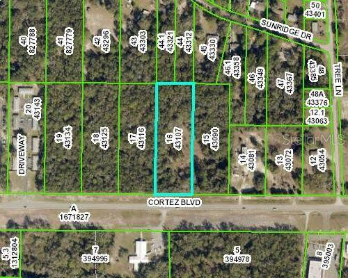 34377 Cortez Boulevard, Ridge Manor, FL 33523 (MLS #W7831596) :: RE/MAX Local Expert