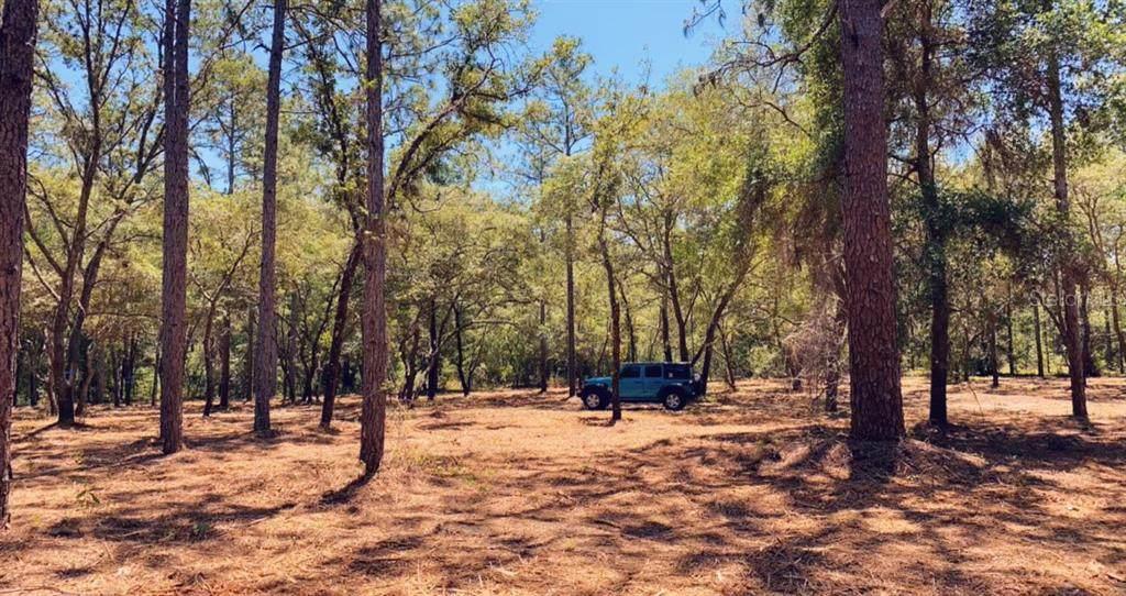 11900 Pine Oak Terrace - Photo 1