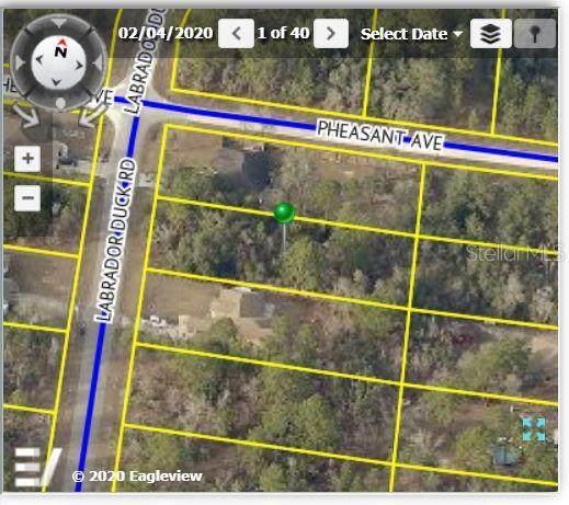 12044 Labrador Duck Road, Weeki Wachee, FL 34614 (MLS #W7834634) :: The Robertson Real Estate Group