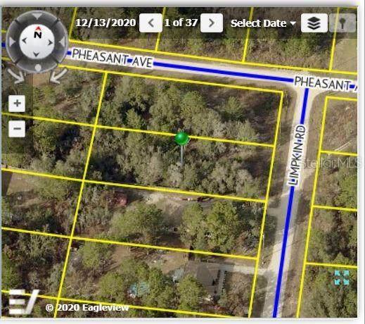 12045 Limpkin Road, Weeki Wachee, FL 34614 (MLS #W7834637) :: The Robertson Real Estate Group