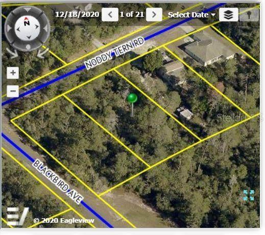9412 Noddy Tern Road, Weeki Wachee, FL 34613 (MLS #W7834793) :: The Robertson Real Estate Group