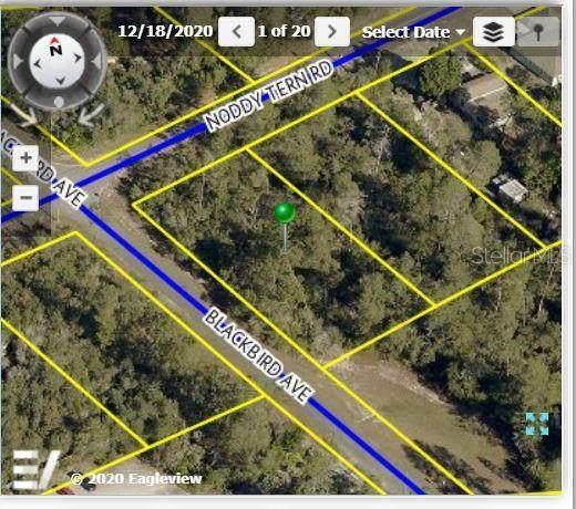 9402 Noddy Tern Road, Weeki Wachee, FL 34613 (MLS #W7834794) :: The Robertson Real Estate Group