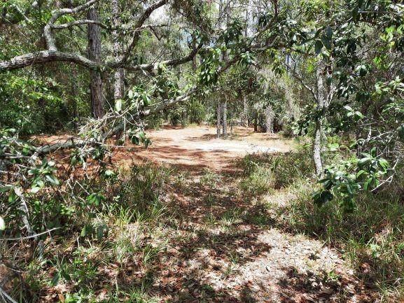 Toucan Trail, Spring Hill, FL 34606 (MLS #W7834923) :: Team Turner