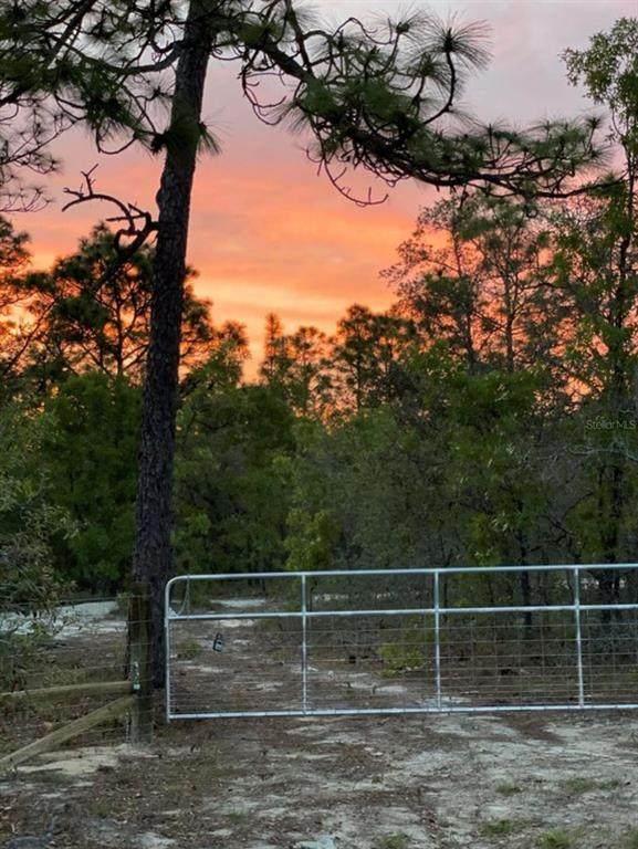 Hawks Nest Trail, Weeki Wachee, FL 34614 (MLS #W7836449) :: Griffin Group