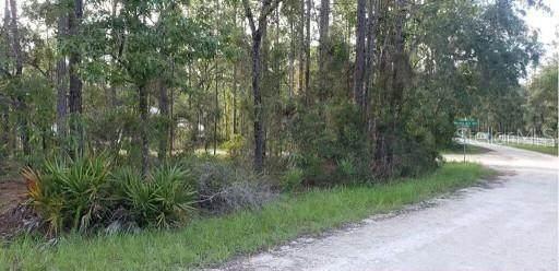 11184 Woodpecker Avenue, Weeki Wachee, FL 34614 (MLS #W7839018) :: RE/MAX Local Expert