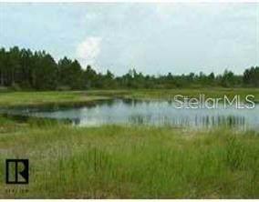 Alloy Street, Webster, FL 33597 (MLS #O5913398) :: Everlane Realty