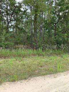 12483 Downy Woodpecker Road, Weeki Wachee, FL 34614 (MLS #W7824263) :: Griffin Group