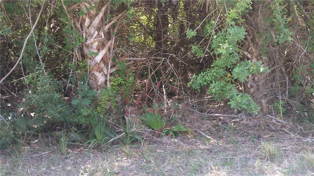 17050 Edgewater Drive - Photo 1
