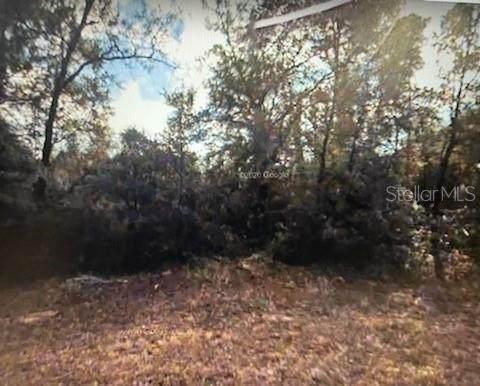 284 E Enfield Lane, Citrus Springs, FL 34434 (MLS #G5043218) :: Godwin Realty Group
