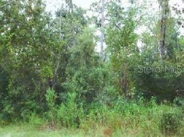 10905 SW 157 Lane, Dunnellon, FL 34432 (MLS #OM605794) :: Everlane Realty