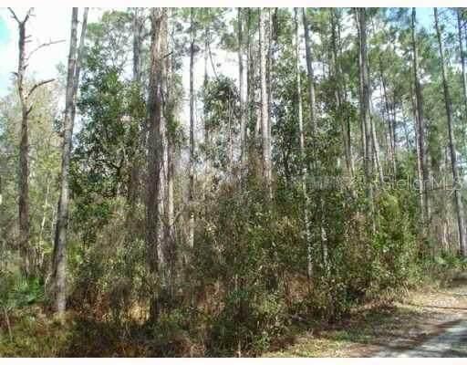 Zephyrhills, FL 33544 :: Everlane Realty