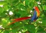 Costa Rica 19 to 32 The Spanish Village Rincon De La Vieja, Costa Rica - Photo 21