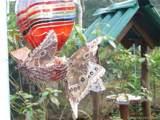 Costa Rica 17 and 18 The Spanish Village Rincon De La Vieja, Costa Rica - Photo 14
