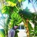479 Bahia Ave - Photo 58