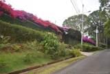 Costa Rica 00 - Photo 35