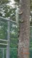 4975 Sabal Palm Blvd - Photo 63