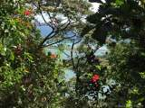 1 Carate Osa Peninsula - Photo 21