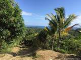 1 Carate Osa Peninsula - Photo 22