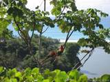 1 Carate Osa Peninsula - Photo 35