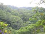 1 Carate Osa Peninsula - Photo 7