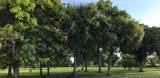 3770 Fort Denaud Road - Photo 3
