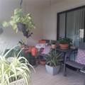 4930 Sabal Palm Blvd - Photo 5