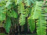 580 Fig Tree Lane - Photo 71
