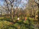 3711 Cherry Blossom Drive - Photo 6