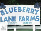 13240 Blueberry Lane - Photo 2