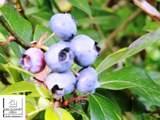 13240 Blueberry Lane - Photo 5
